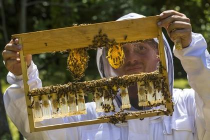 apiculteur embrun