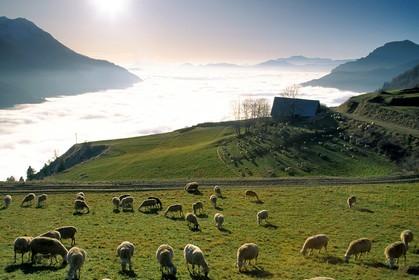 Agriculture des hautes alpes phototh que photos - Chambre d agriculture des hautes alpes ...